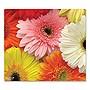 Mouse Pad Floral Gerberas Design 7.5 x 8.5 Multicolor 78WN90